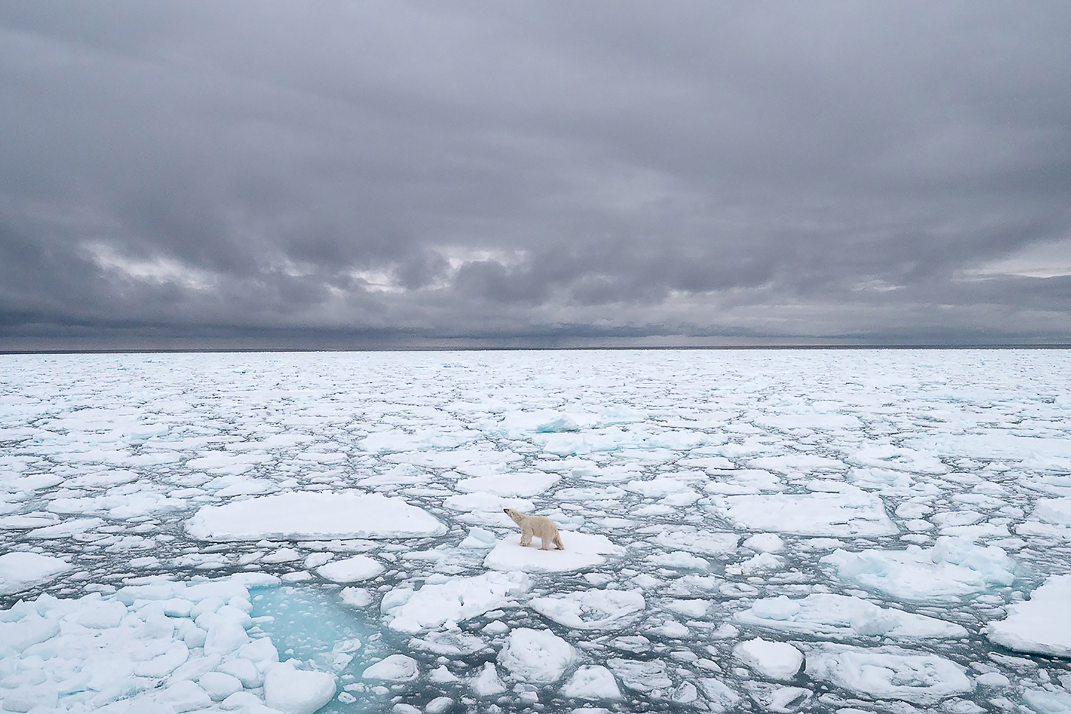 Ha elolvad a jég, eltűnnek a jegesmedvék #moszkvater