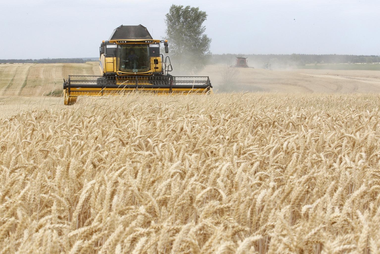 """""""Egyértelmű sikerágazat ugyanakkor a mezőgazdaság. Míg 1991-ben Ukrajnában például 51 millió tonna búzát takarítottak be, addig 2019-ben 74,3 millió tonnát. De ugyanígy komoly eredményeket ér el az IT szektor, ezen belül is a programozás"""" #moszkvater"""
