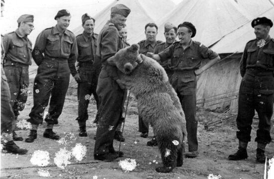 Wojtek 1944 körül bajtársai körében #moszkvater